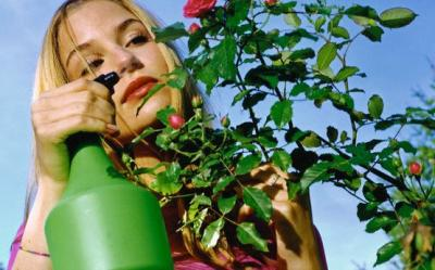 Cum se ingrijesc trandafirii