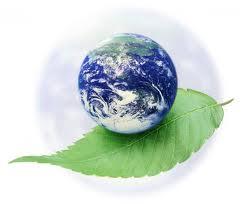 Sfaturi pentru un stil de viata eco (3)