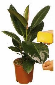 Curatarea plantelor de interior