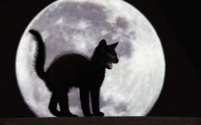 De ce ne e teama de pisica neagra?