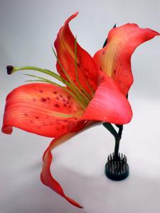 Flori si plante decorative