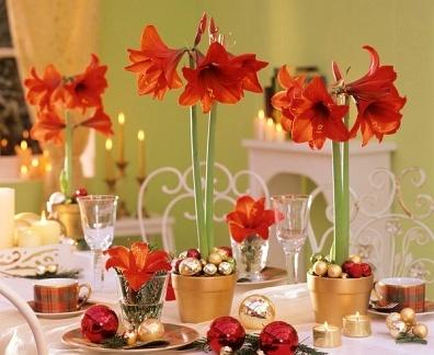 De Craciun, decoreaza-ti casa cu flori!