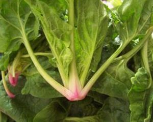 Mananca BIO - 2 salate satioase si sanatoase!