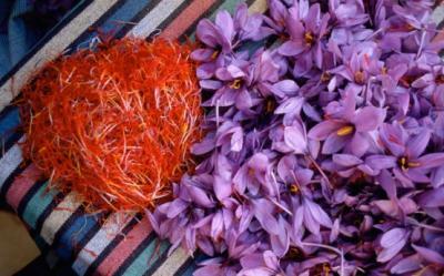 Planta medicament: Sofranul poate distruge tumorile canceroase, cu efecte secundare minime