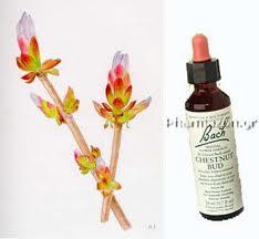 Cele 38 de remedii florale Bach - 36