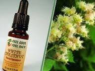 Cele 38 de remedii florale Bach - 6