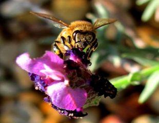 2 motive pentru care ar trebui sa nu mai mananci miere
