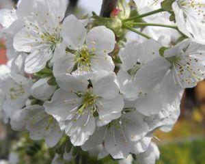 Dr. Oz: 4 remedii naturiste pentru alergiile de primavara