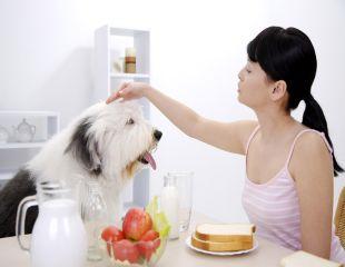 7 moduri prin care animalul de companie te face mai sanatos