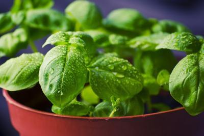 Remedii naturiste pentru raceala si gripa!