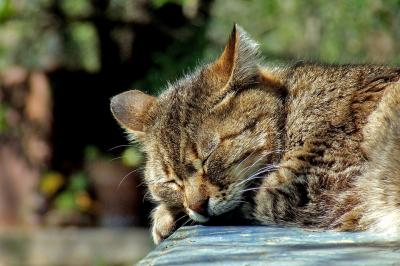 Cat de mult trebuie sa dormim zilnic?