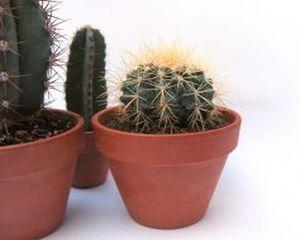 6 plante de apartament usor de ingrijit
