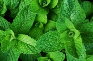 4 ceaiuri din plante medicinale pentru zile caniculare