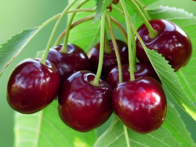 Ciresele: Miraculoasele fructe care te ajuta sa slabesti
