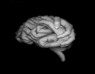 Studiu: Creierul are o tehnica similara celei pe care Google o foloseste in algoritmul sau de cautare