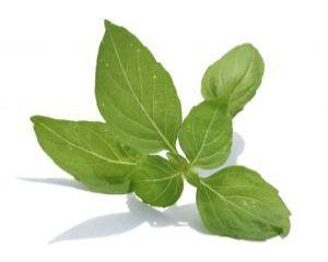 Plante aromatice la ghiveci: busuiocul