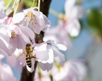Cura de energizare cu miere si propolis