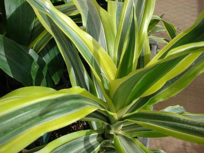 5 plante de apartament usor de intretinut