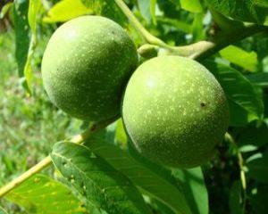 Dulceata de nuci verzi