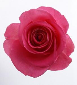 Cum preparam dulceata de trandafiri?