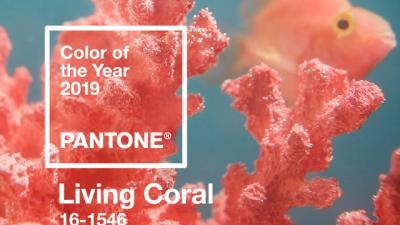 S-a aflat culoarea anului 2019 - Institutul Pantone a facut anuntul