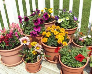 Ce beneficii va aduc plantele de apartament