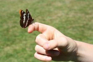 Expozitia Lumea Fluturilor de la Antipa poate fi vizitata pana pe 14 septembrie!