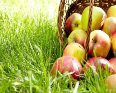 Sa inceapa detoxifierea de vara! Iata 5 optiuni perfecte care isi fac efectul instant!