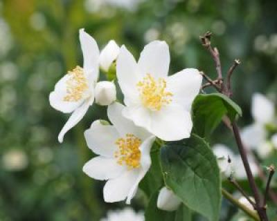 7 plante care atrag energiile pozitive