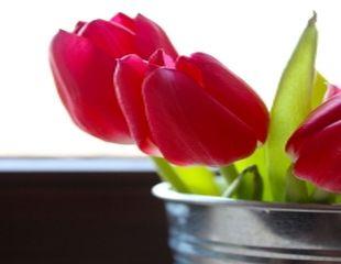 10 lucruri pe care nu le stiati despre lalele