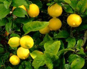 Cele mai bune 10 alimente pentru detoxifierea organismului