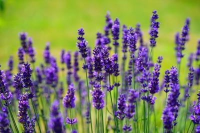 Plante medicinale pe care le poti creste in propria curte