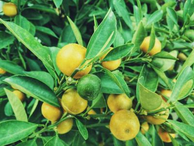 Consuma mai multe fructe si vei slabi garantat. Iata cateva idei de fructe benefice!