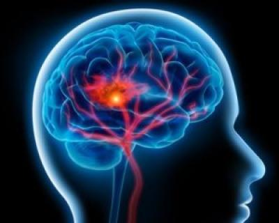 Anatomia creierului influenteaza alegerile alimentare