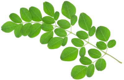 Ce este Moringa, denumit si Arborele Miracol?