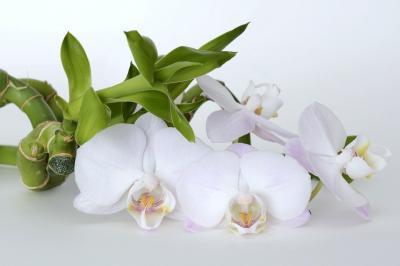 Plante care aduc noroc in casa