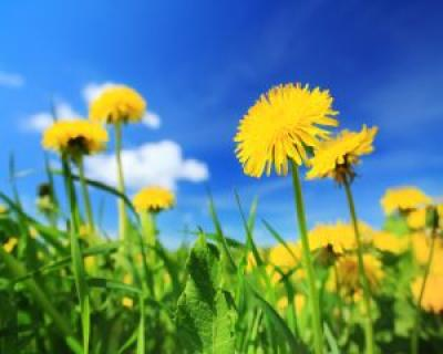 11 plante care trateaza problemele digestive