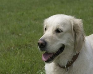 Pet Expo - targ dedicat animalelor de companie