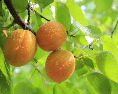 7 fructe cu un continut redus de calorii