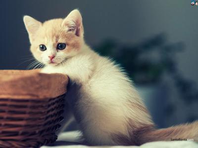 Top 7 motive pentru care ai nevoie de o pisica anul acesta!