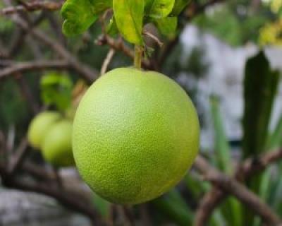 Fructul care te ajuta sa slabesti si iti mentine sanatatea la cote maxime