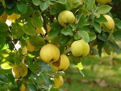 Fructe si legume de toamna - beneficii pentru sanatate