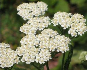 Remedii naturale impotriva toxiinfectiei alimentare