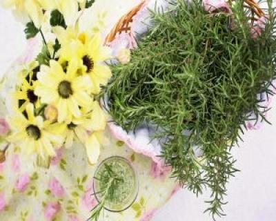 Rozmarinul - o planta-minune pentru sanatatea ta
