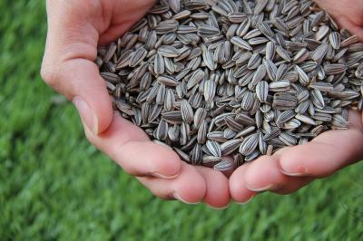Beneficiile semintelor de floarea-soarelui. Sunt un izvor de sanatate!