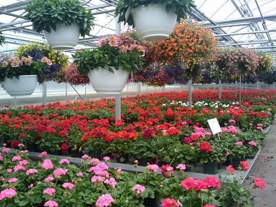 Super afacere pentru femei: cultivarea florilor in ghivece