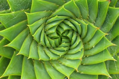 101 exemple de tratamente naturiste care functioneaza