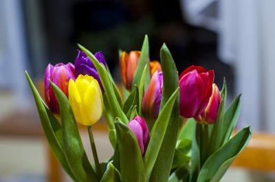 Trucuri interesante pentru a avea mereu flori proaspete in casa...