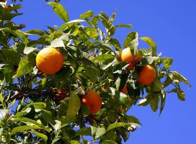 Top 10 alimente bogate in vitamina C