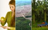 Uleiul de palmier, cel mai consumat ulei vegetal din lume si dezastrul ecologic pe care il lasa in urma
